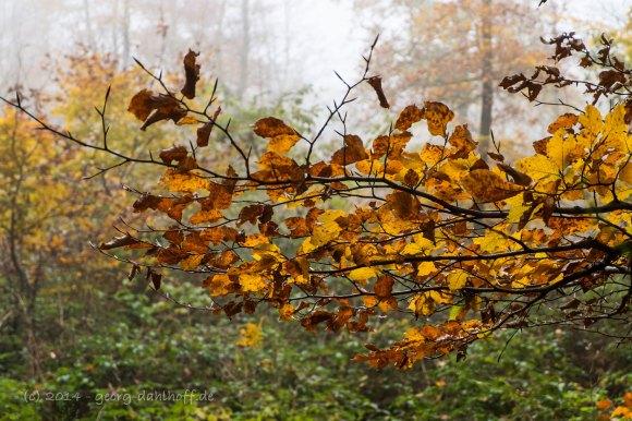 Herbststimmung - Bild Nr. 201411021589