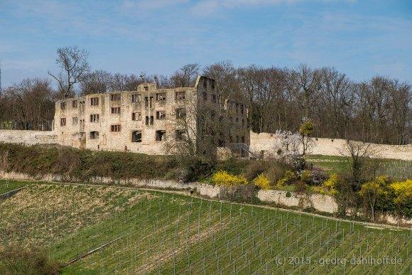 Ruine Landskron - Bild Nr. 201503281824