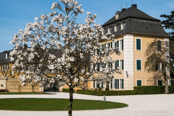 Schloss Johannisberg - Bild Nr. 201504122088