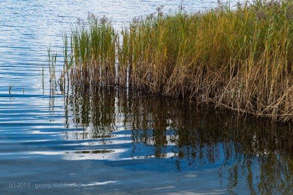 Am Ufer... - Bild Nr. 201509263257