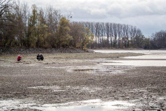 Niedrigwasser an der Südspitze der Rheininsel Kisselwörth - Bild Nr. 201511154957