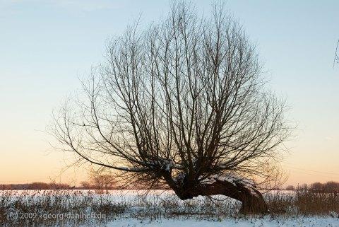 Winter am Niederrhein - Bild Nr. 200901062247