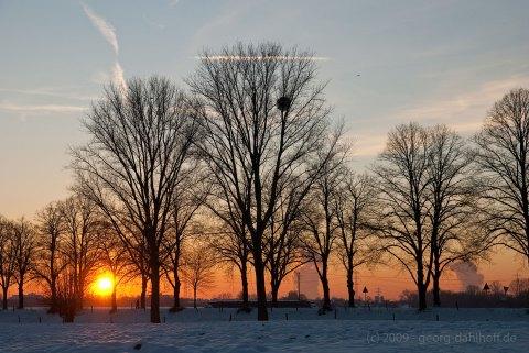 Winter am Niederrhein - Bild Nr. 200901062257