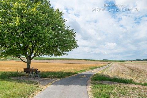 Auf dem Selztal-Radweg ... - Bild Nr. 201607304807