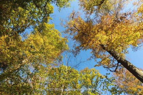 Herbstlicher Wald auf dem Neroberg - Bild Nr. 201610300929