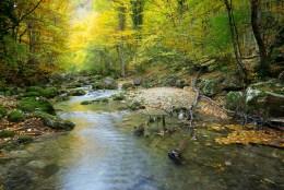 streamwoods