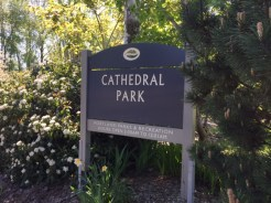 Cathedral Park takes its name from the succession of progressively taller piers that are part of the St. Johns Bridge.