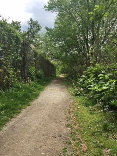 Running path along the Three Rivers Heritage Trail in Lawrenceville.