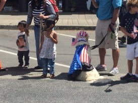 Evidently, this dog had enough of the parade.