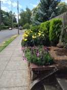 Vibrant colors brighten a neighborhood street north of Mount Tabor.