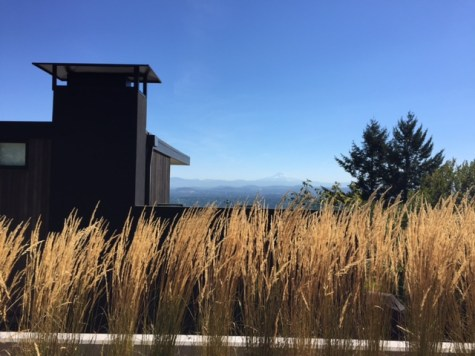 A modern home and willowy grasses come together to frame a view of distant Mount Hood.