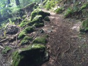 Moss-covered rocks form a natural barrier on the Cascade Lake trail.