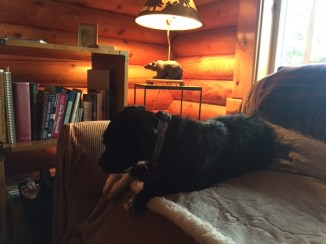 After an active day outdoors, it's time to relax in the cabin's soft light.