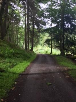 Trees provide a shaded corridor along Eagle Lake Lane.
