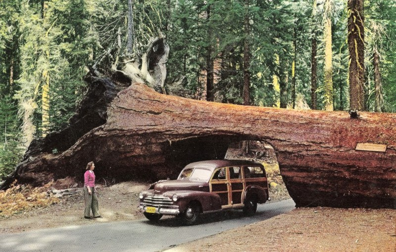 """""""If you've seen one redwood tree…"""