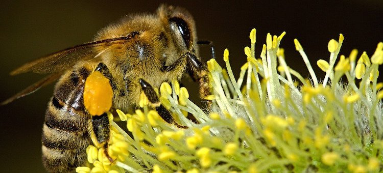 Some Good News about Bees