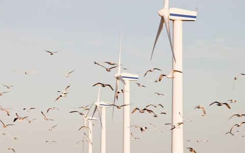 Saving Birds from Renewable Energy