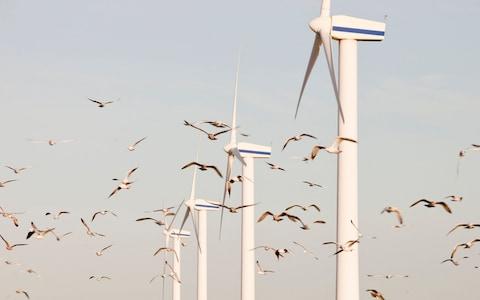 Saving Birds from Renewable Energy