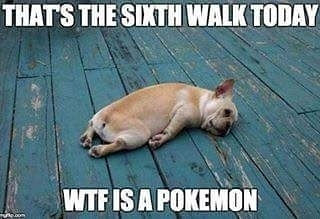 Pikaaa… regram @equipawspetsmiami Yup, pretty much all the dogs right now. How many of our fellow walkers are trying to catch them all? #sorrynotsorry #pokemon #pokemongo #pikaaaaa