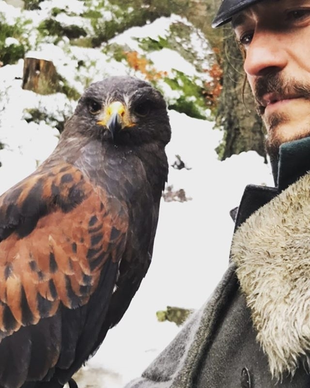 Orlando Bloom with a hawk. If that's not a sign that I need to work on my story with hawk hunting, I don't know what is.  regram @orlandobloom hawk 👁's  #bts #carnival row