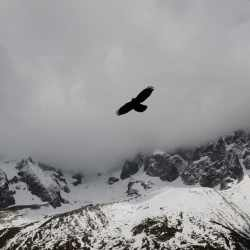 An eagle flying over a mountain with skies or fog below