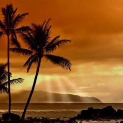 Leafy palm trees in front of an orange sunset background