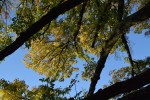 Proactive Prevention Can Save the Green Ash From Invasive Beetles