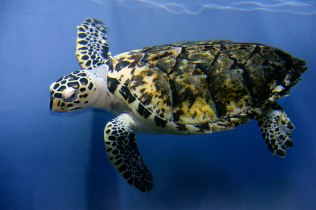 Tortoise-whole-body