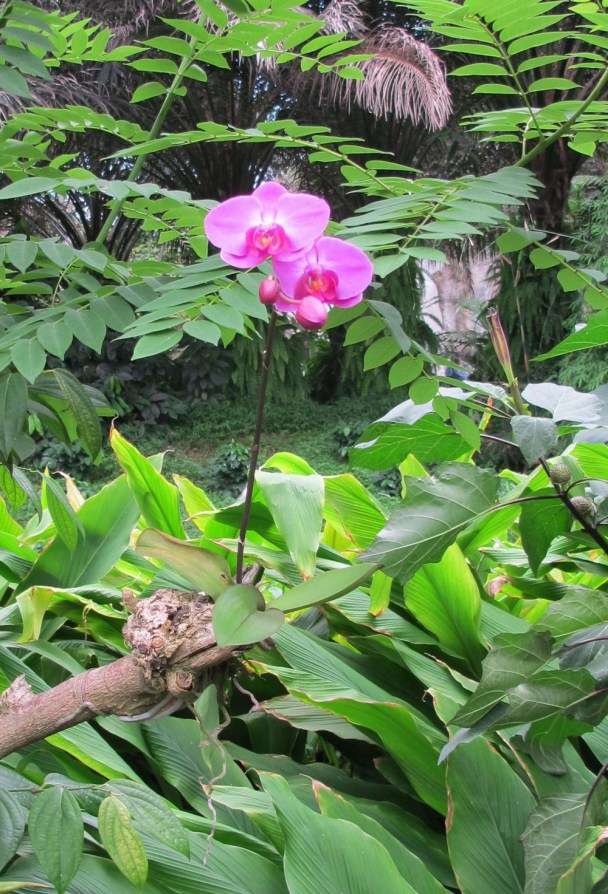 Foto: thesnakeblog.wordpress.com