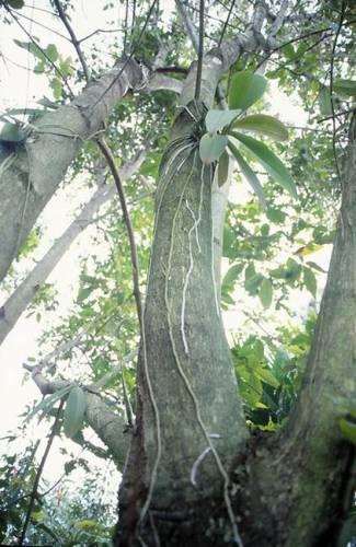 Foto: treedirectory.blogspot.ro