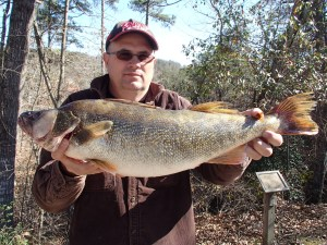 Buddy Wade with his 8 pound, 9 ounce Lake Lanier walleye.