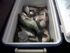 Cooler-full of crappie caught on Lake Hartwell last March.