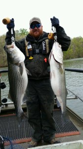 Fisheries technician Chris Looney shows off two stripers, a 26 pounder and 28 pounder, collected during a sampling survey of Lake Lanier last week.