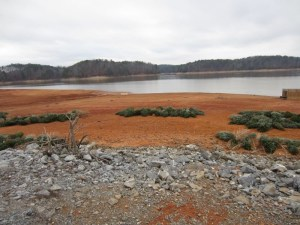 Christmas trees being used for fish habitat in Allatoona.