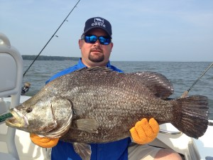 Justin Armour caught this giant tripletail while fishing with Capt. TJ Cheek last month. The monster inhaled a big white shrimp. (Photo courtesy of Capt. TJ Cheek)