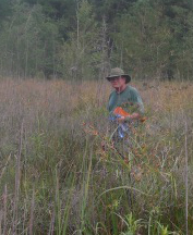 Biologist Tom Patrick searching for Dichanthelium hirstii - the Holy Grail of Georgia plants.