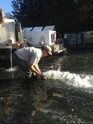 hybrid toona stock flush Dec 2015 resized