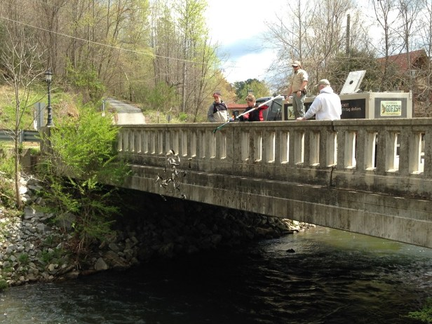 trout stock Helen Mikey S Apr 2016 small