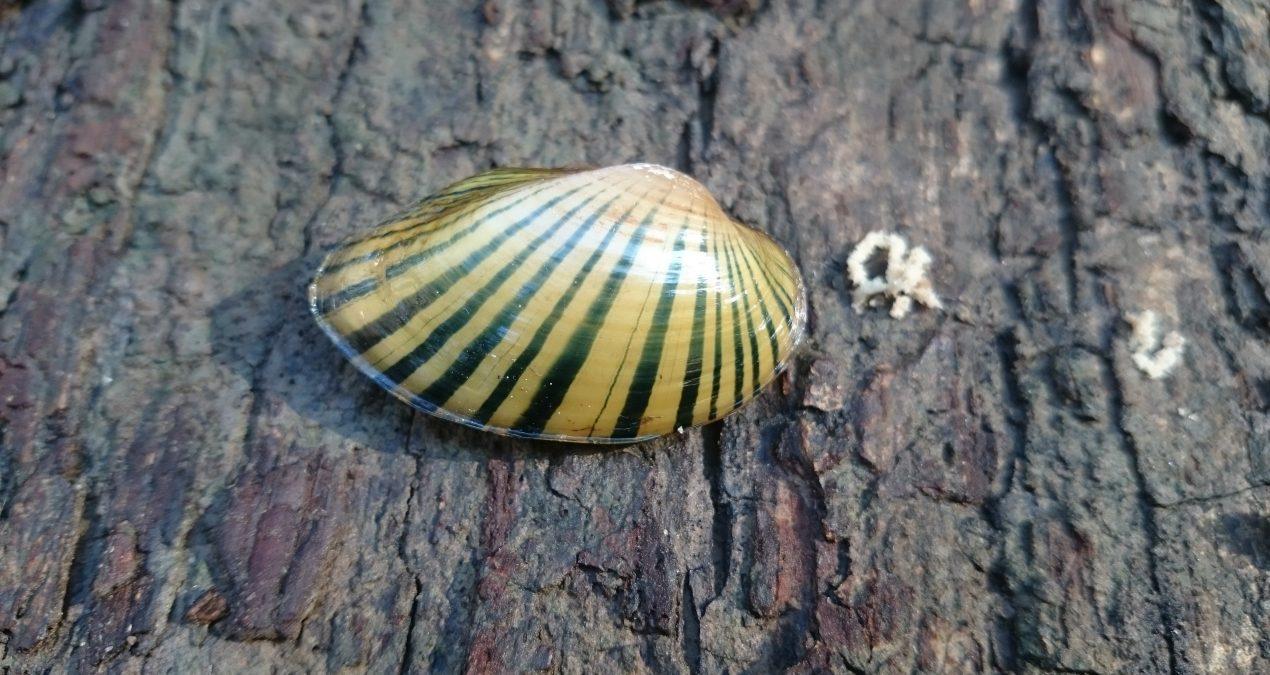 Georgia's Misunderstood Mollusks