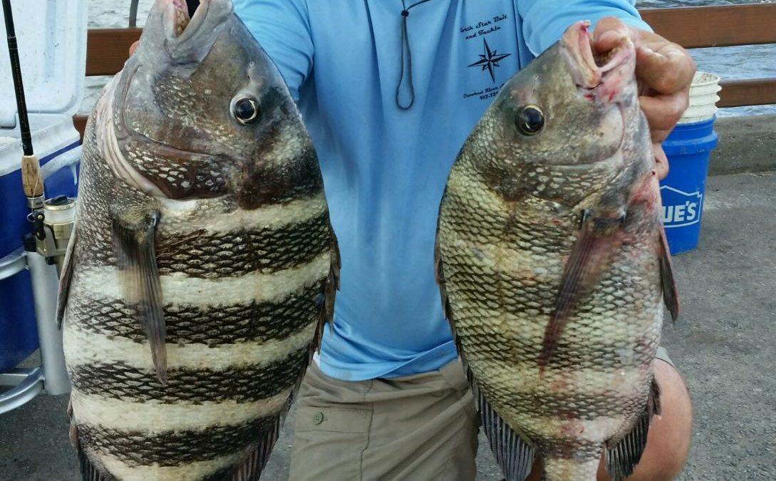 Georgia Fishing Report: December 9, 2016