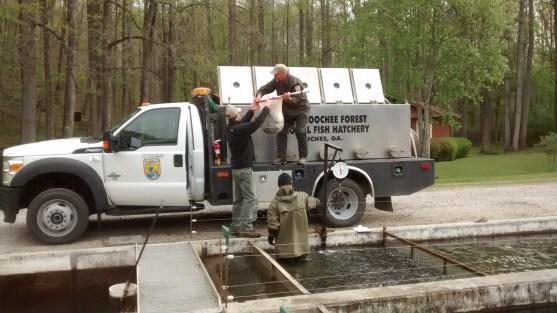 NE GA trout stocking loading Chatt truck at Buford2 Apr 2016