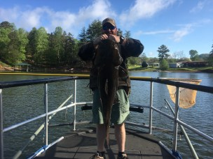 catfish flathead 37lb Nottely shock May2017 small