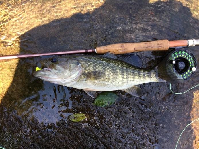 bass shoal 14in Sautee Hooch BS 8-20-17