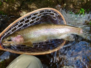 trout rbt 21in Dukes 2-6-16