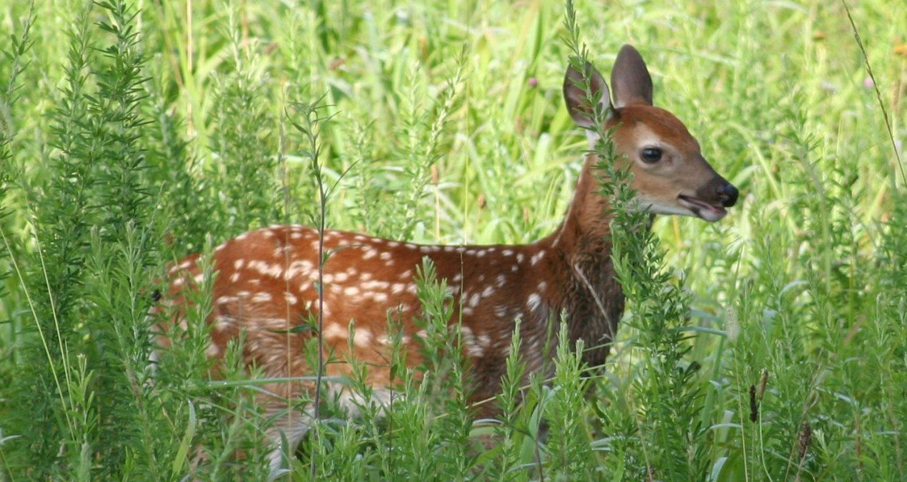 6 Reasons Not To Rescue Young Wildlife