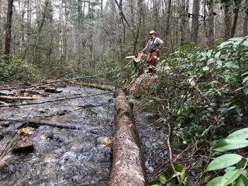 stream structures CutHemlocks_WalnutFork_TonyAnderson_03.29.18small