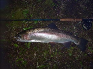 Rainbow Trout 23inches DarkThirty CoffinFlies