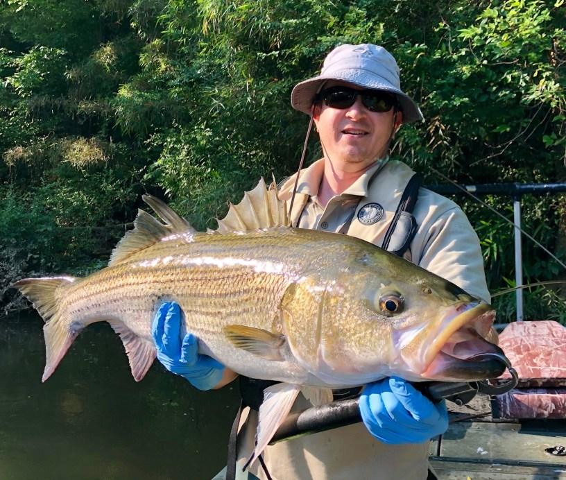 Georgia Fishing Report: June 8, 2018 | Georgia Wildlife Blog