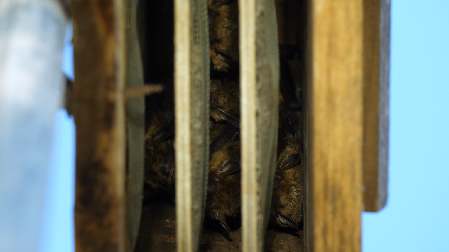 Bats in bat houses still from video for georgia wild bats heidi dnr