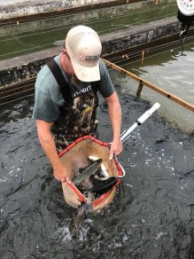 Travis shows us a nice Net of Trout for Delayed Harvest Stocking